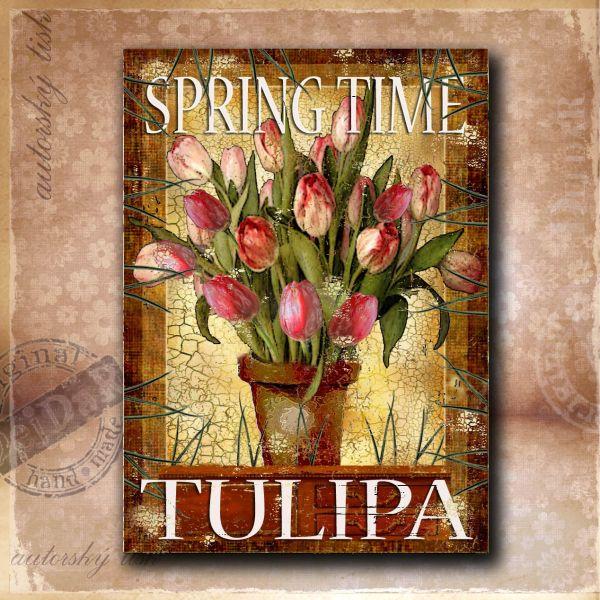 OM tulipány II.