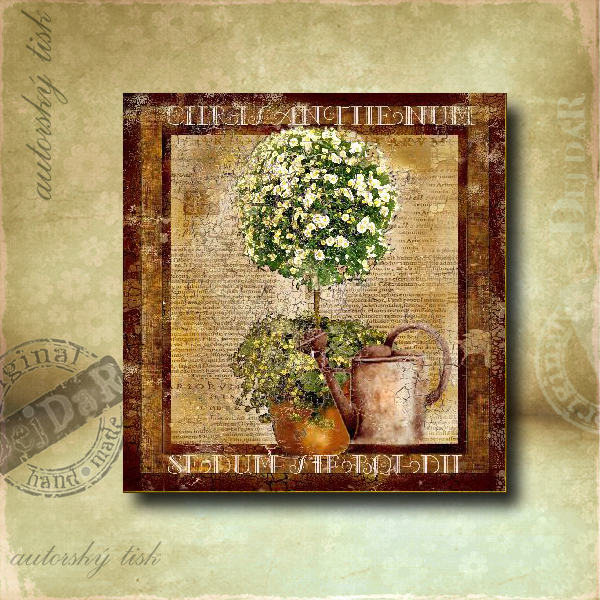 Obrázek čtvercový chrysantema