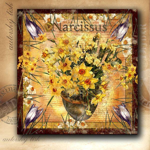 Obrázek čtvercový narcis II.