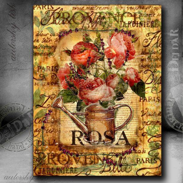 Obrazy růže I.