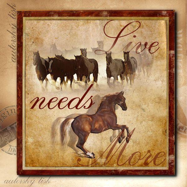 Obrázek čtvercový koně II.