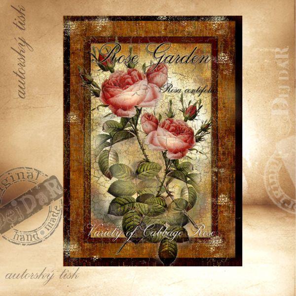 OM růže II.