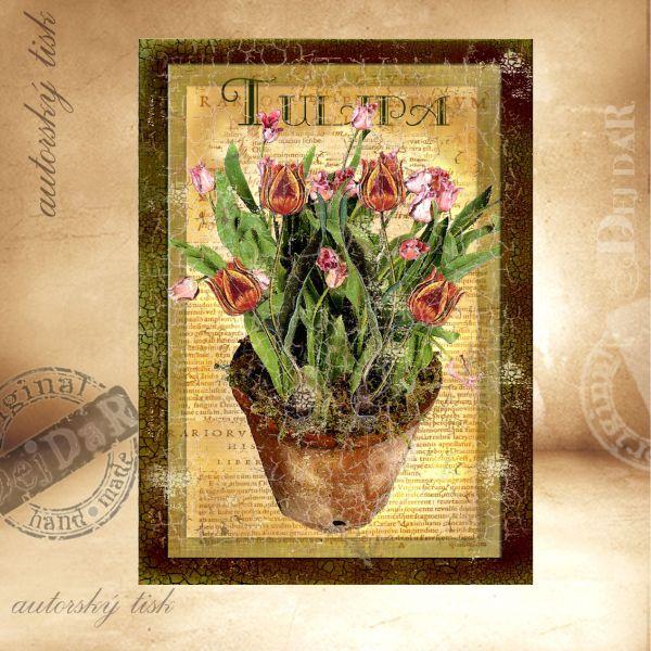 OM tulipány III.