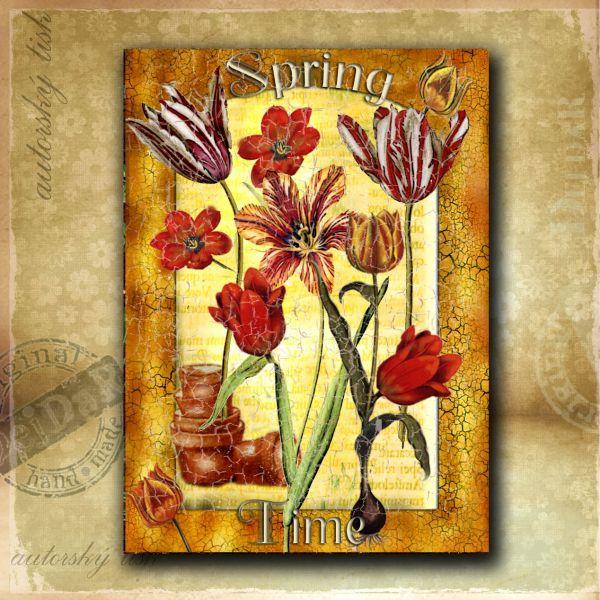 OM tulipány I.