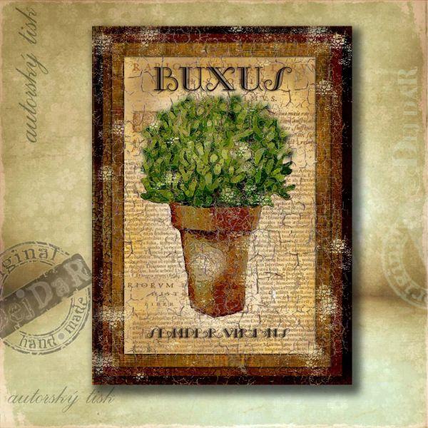 OM buxus II.