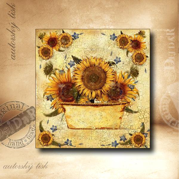 Obrázek čtvercový slunečnice II.